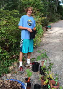 Eric triumphantly holding the largest tulip poplar seedling of the day which he managed to dig up with some difficulty.